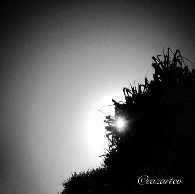 Let Go by cazartco